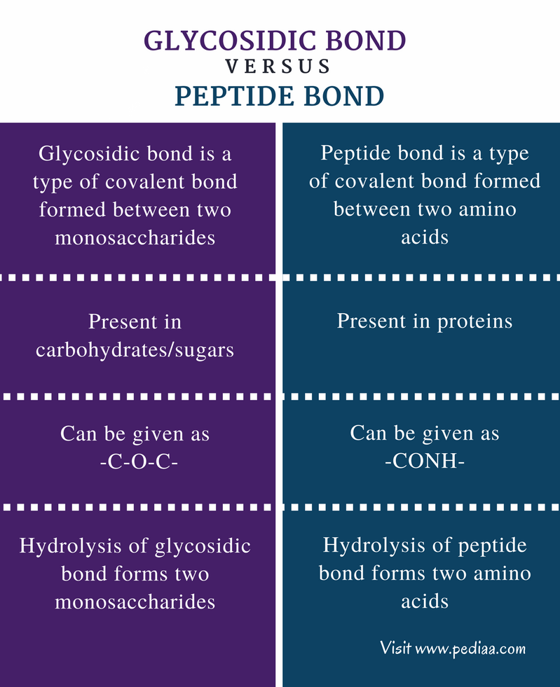 Difference Between Glycosidic Bond and Peptide Bond - Comparison Summary