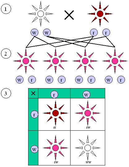 Main Difference - Mendelian vs Non Mendelian Inheritance