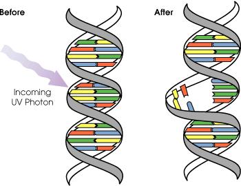 Main Difference - Mutagen vs Carcinogen