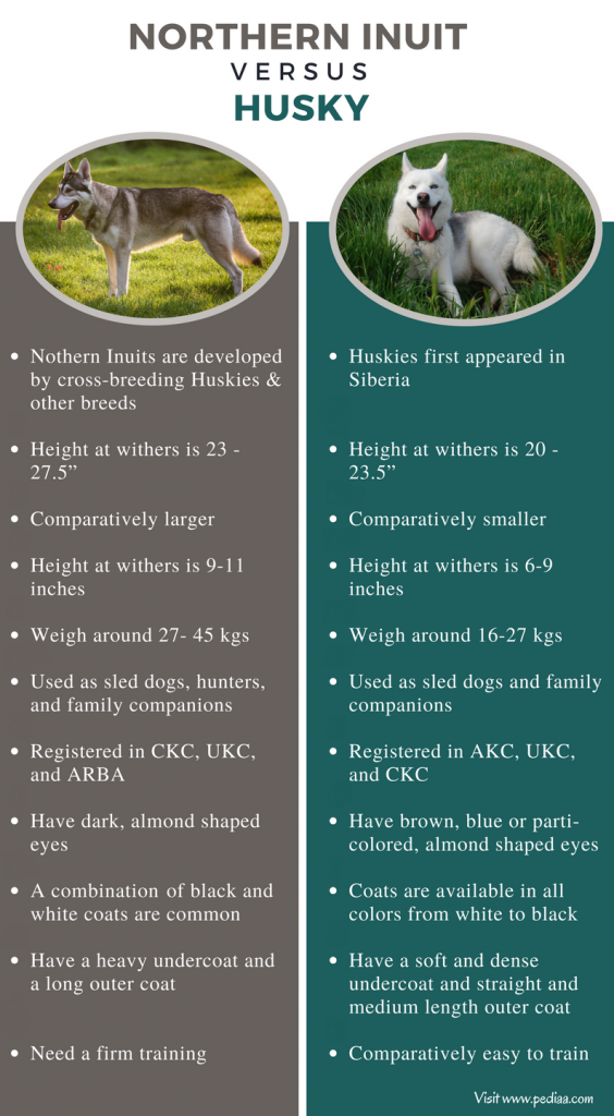 Difference Between Northern Inuit and Husky - Comparison Summary