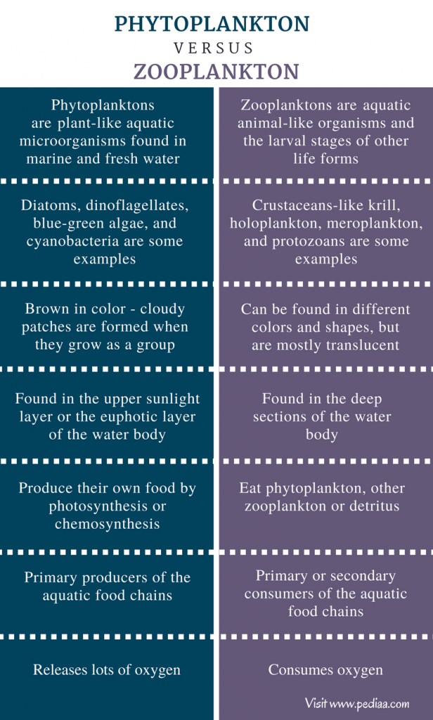 Difference Between Phytoplankton and Zooplankton - Comparison Summary