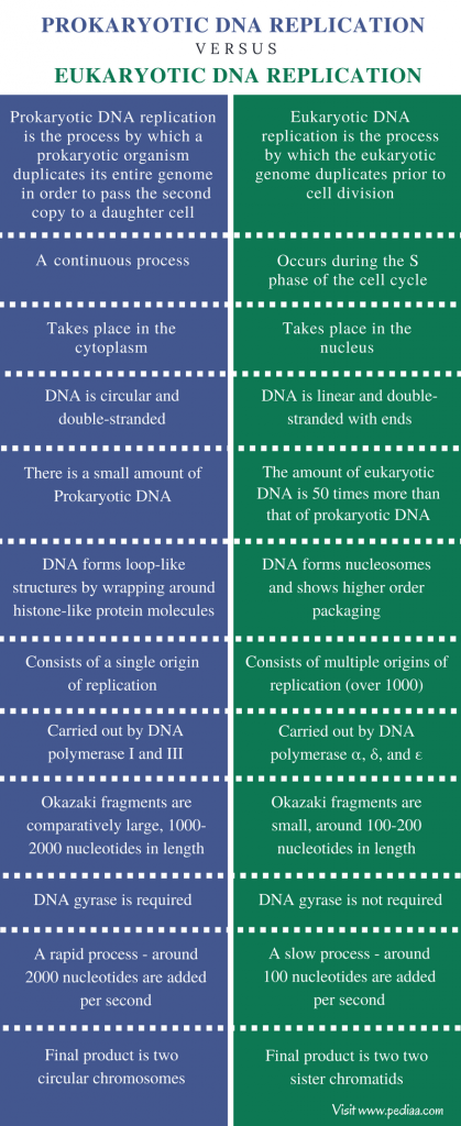 Difference Between Prokaryotic and Eukaryotic DNA Replication - Comparison Summary (1)