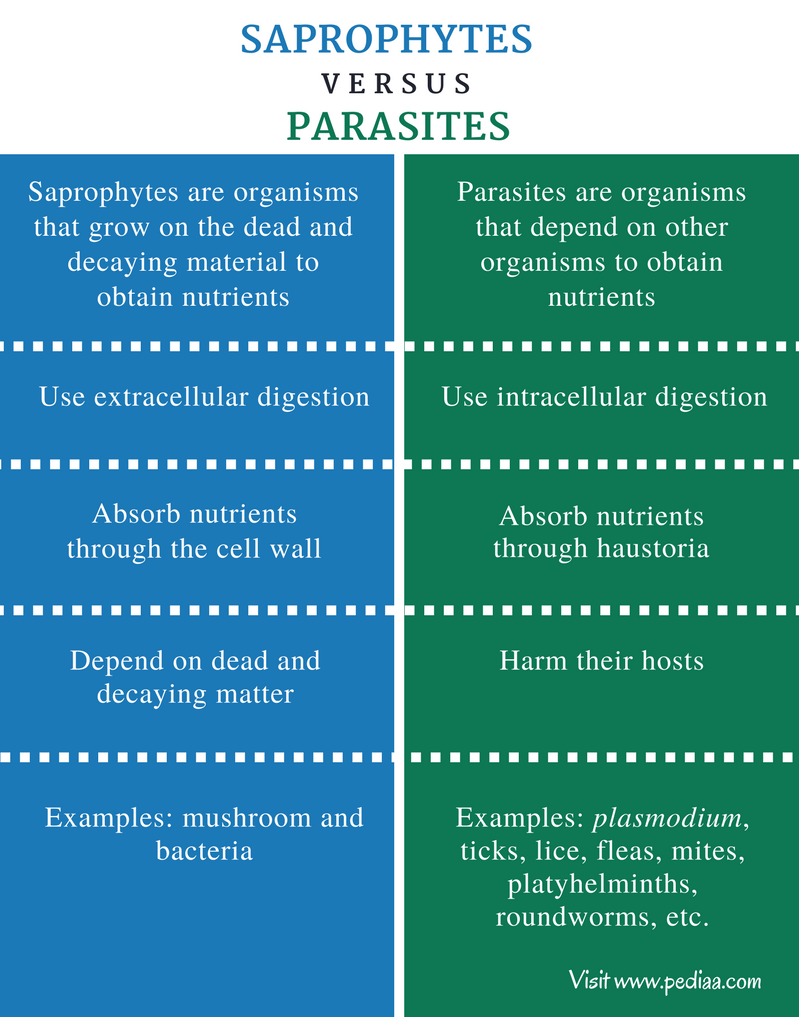 Difference Between Saprophytes and Parasites - Comparison Summary