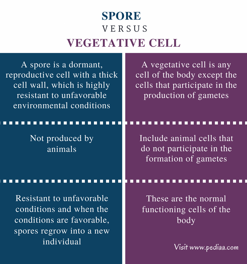 Difference Between Spore and Vegetative Cell - Comparison Summary