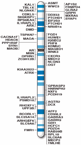 Difference Between X and Y Chromosome