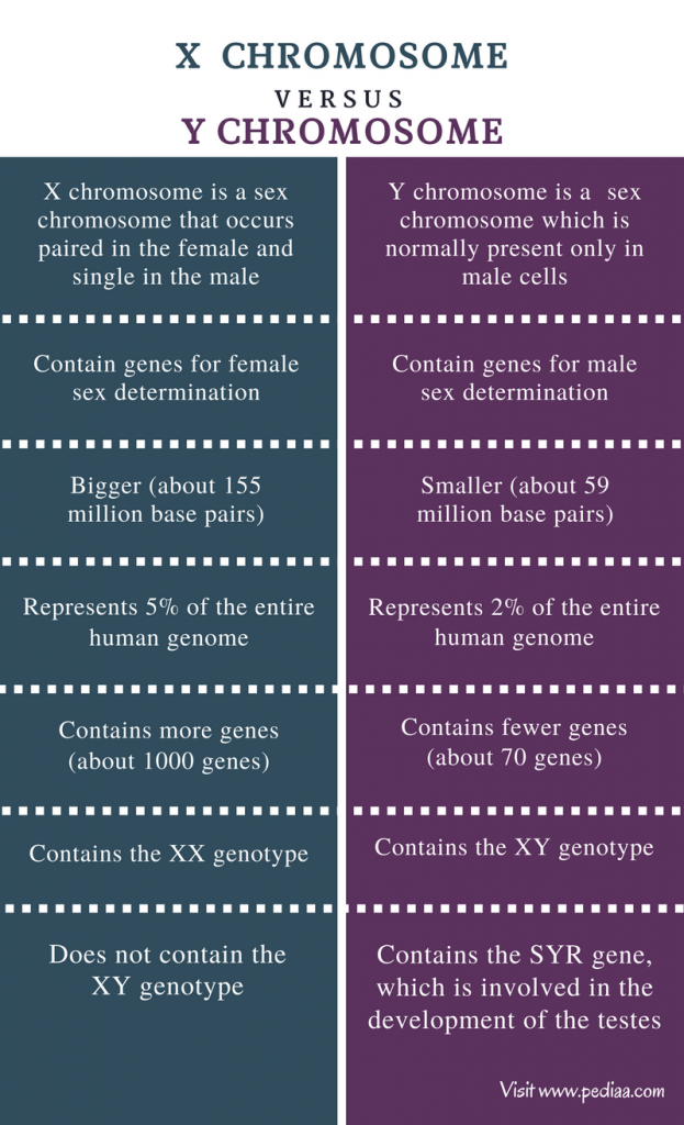 differences between autosomal and sex chromosome in Murfreesboro
