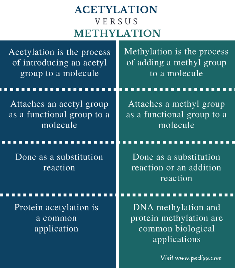 Difference Between Acetylation and Methylation - Comparison Summary