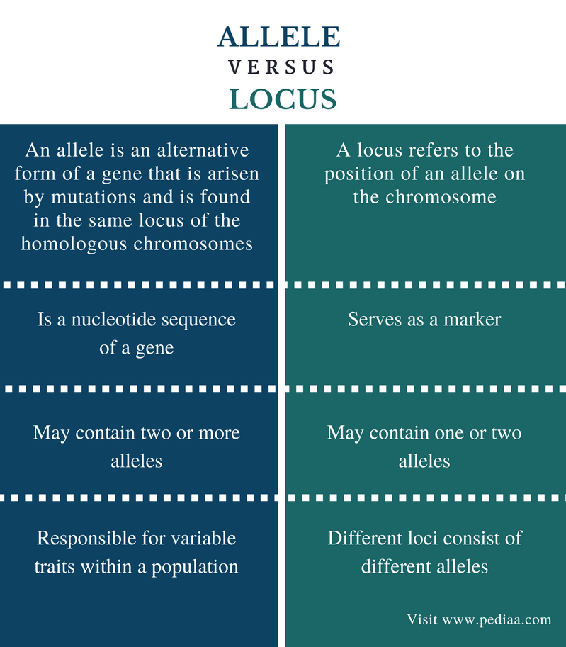 Difference Between Allele and Locus - Comparison Summary