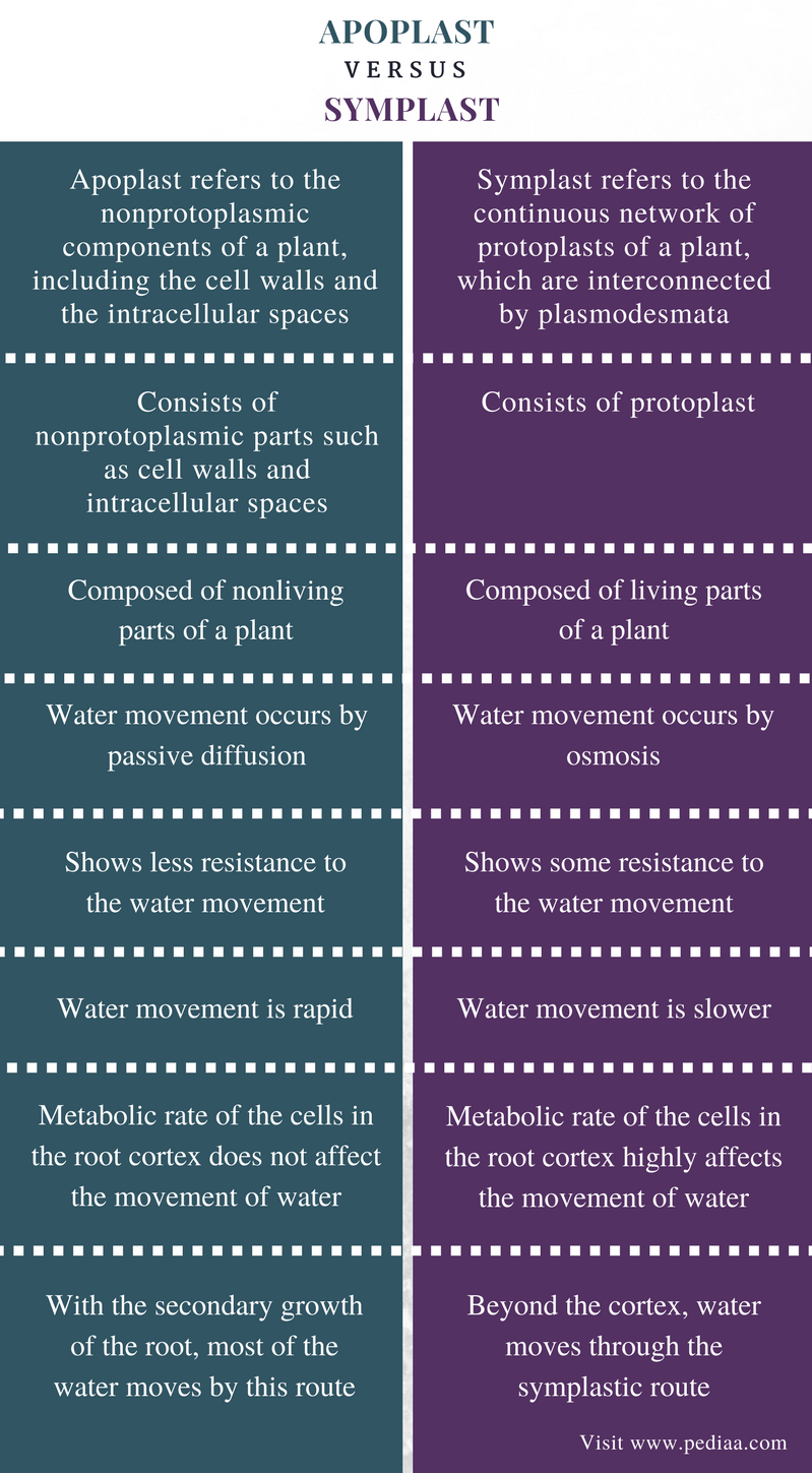 what is the difference between movement and locomotion