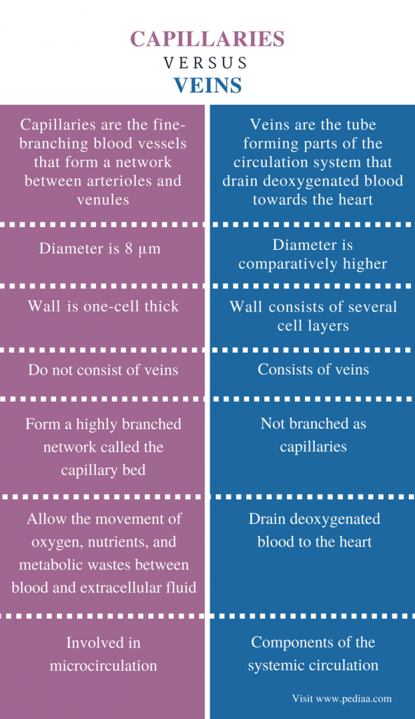 Difference Between Capillaries and Veins - Comparison Summary
