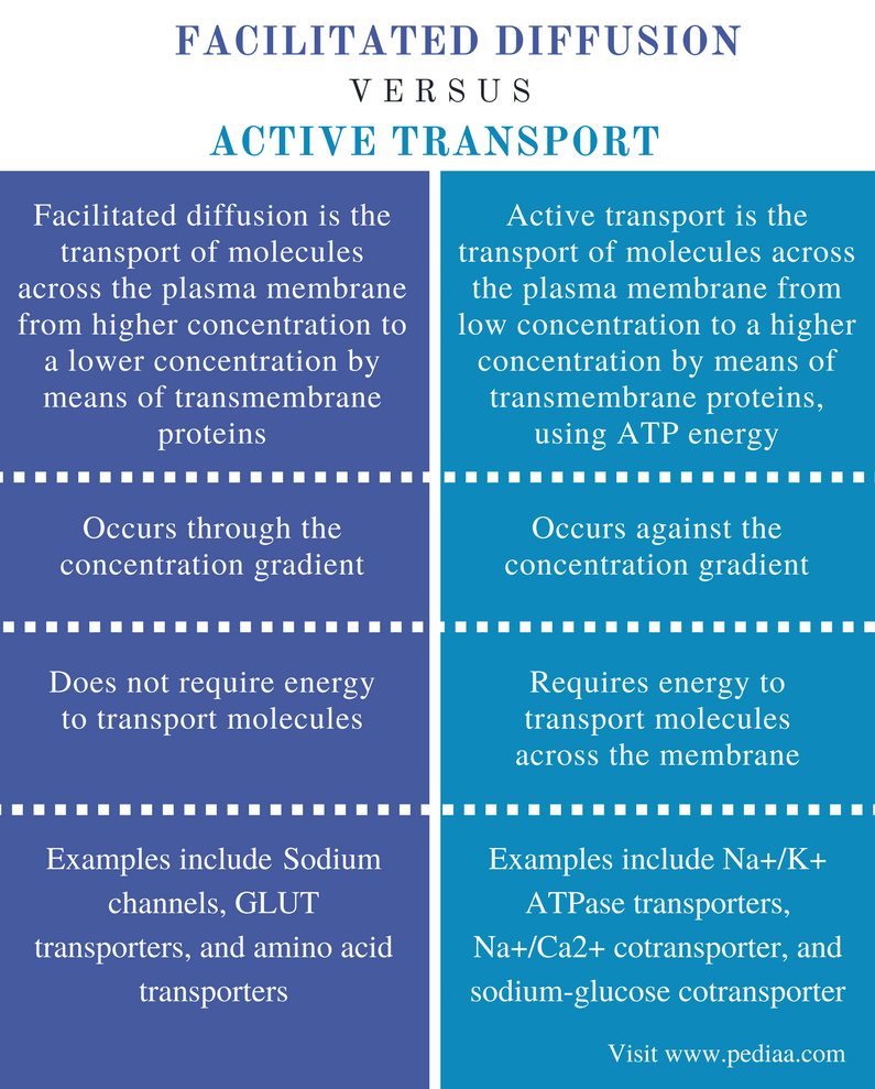 Difference Between Facilitated Diffusion and Active Transport - Comparison Summary