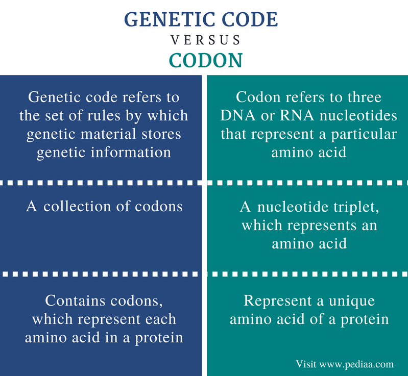 Difference Between Genetic Code and Codon - Comparison Summary