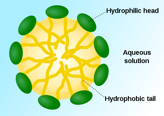 Main Difference - Hydrophobic vs Hydrophilic Molecules