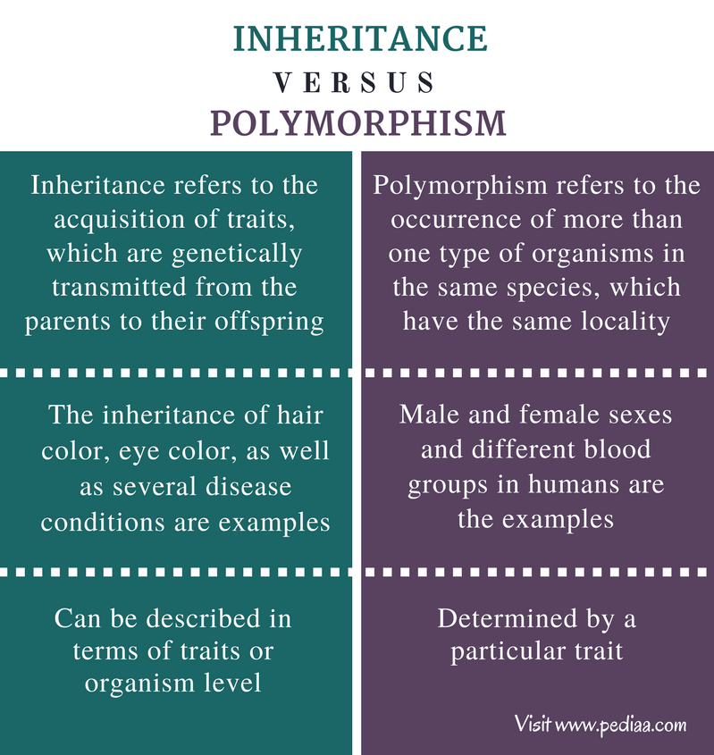 Difference Between Inheritance and Polymorphism - Comparison Summary