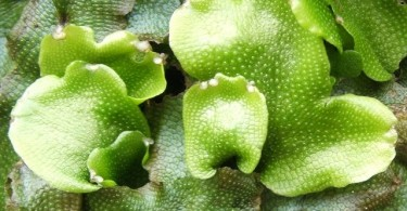 Difference Between Liverworts and Mosses