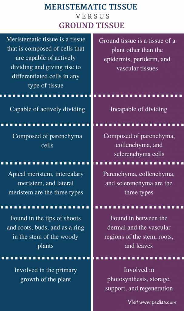 Difference Between Meristematic Tissue and Ground Tissue - Comparison Summary