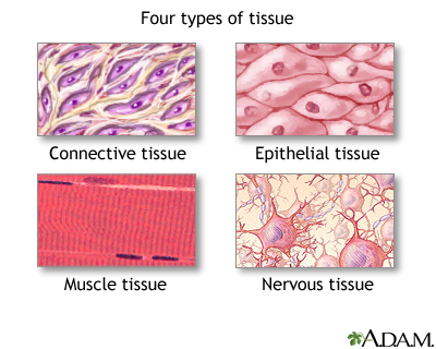 Difference Between Plant and Animal Tissue
