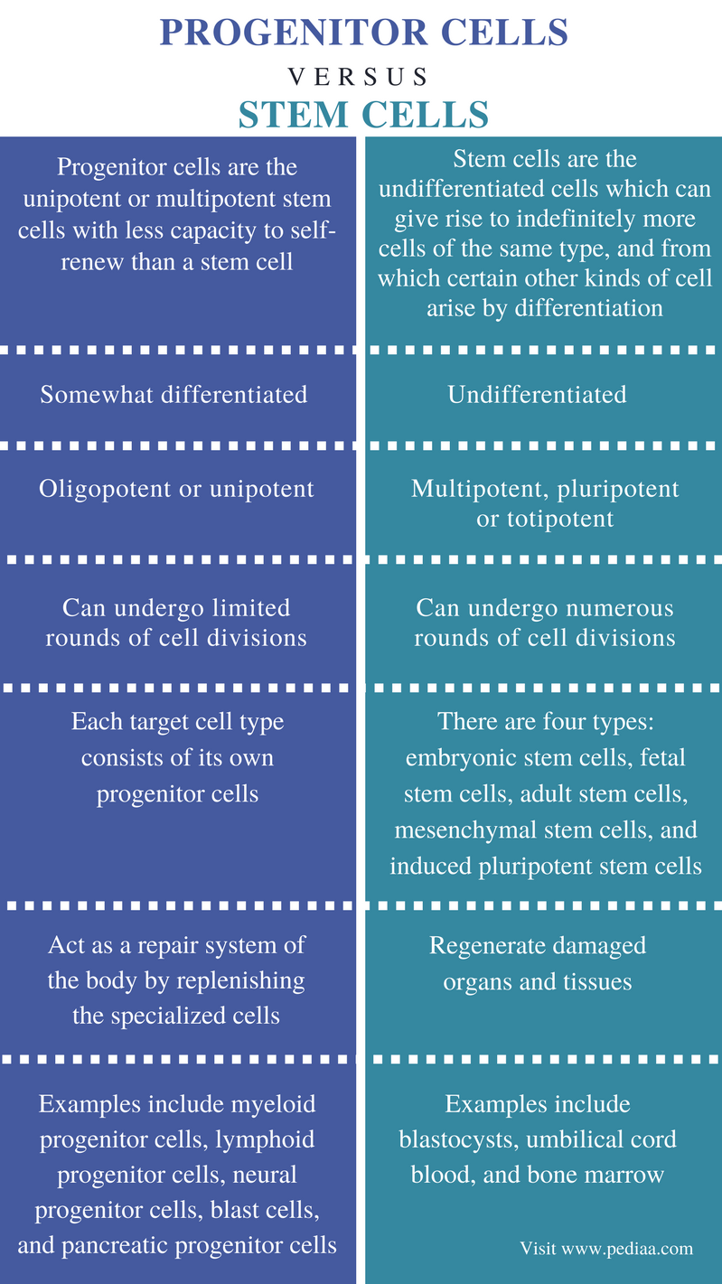 Difference Between Progenitor Cells and Stem Cells - Comparison Summary