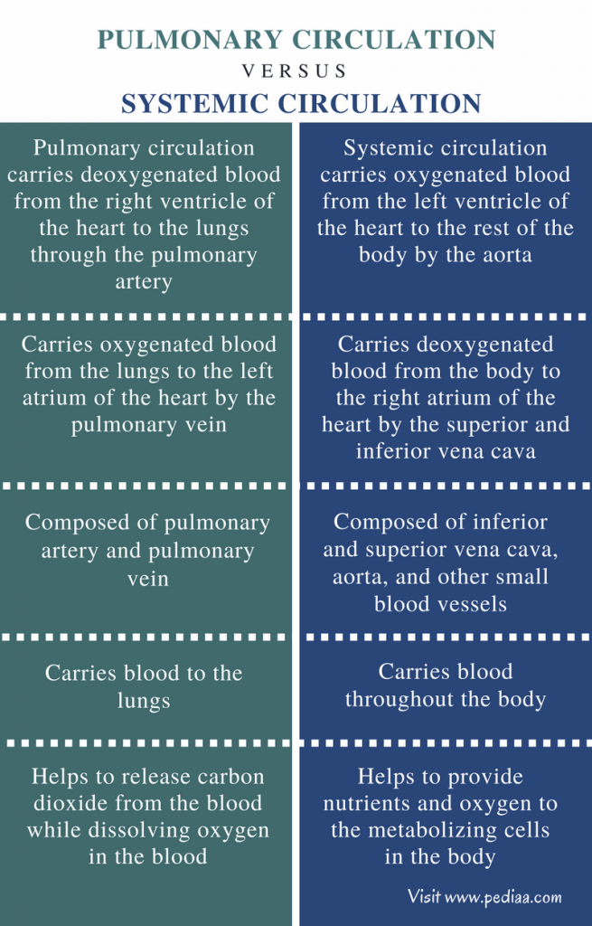 Difference Between Pulmonary and Systemic Circulation - Comparison Summary