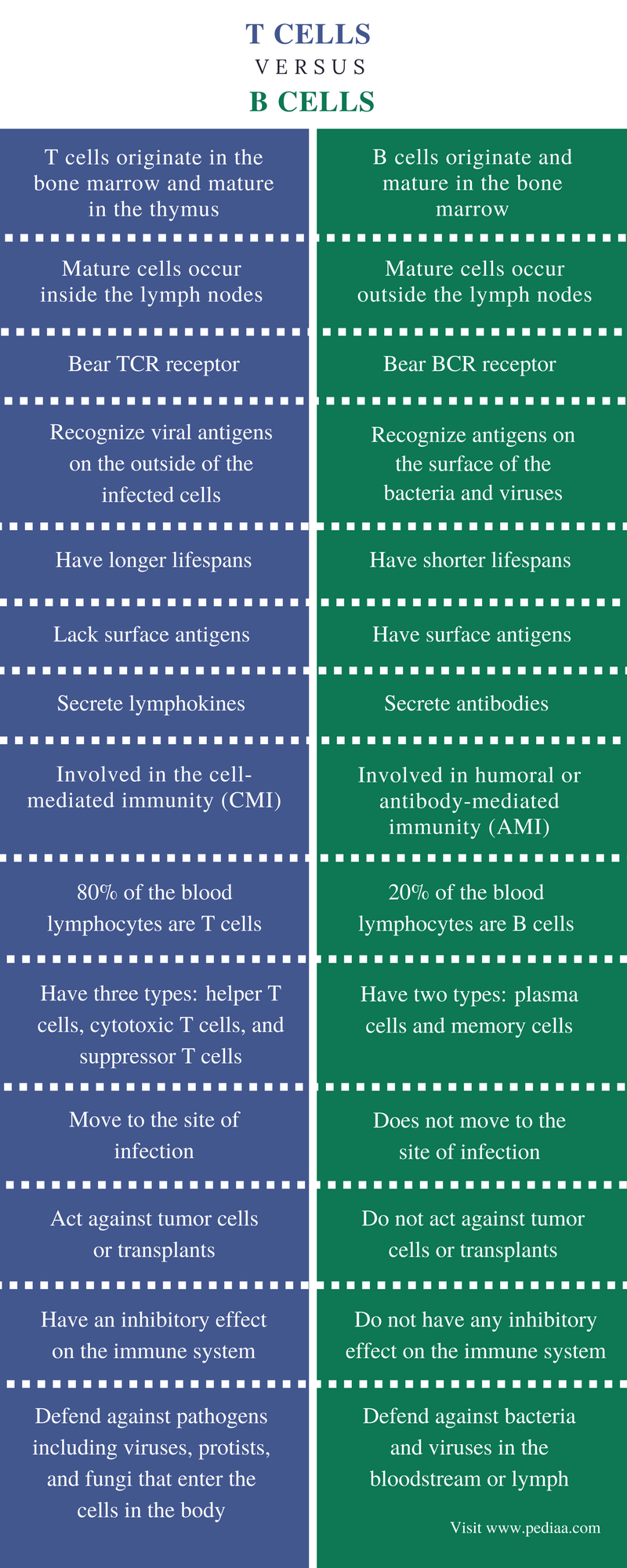Difference Between T Cells and B Cells - Comparison Summary