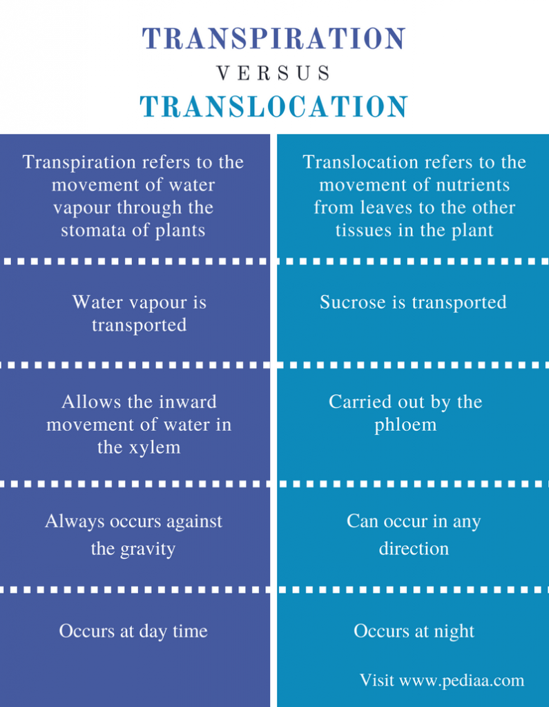 Difference Between Transpiration and Translocation - Comparison Summary