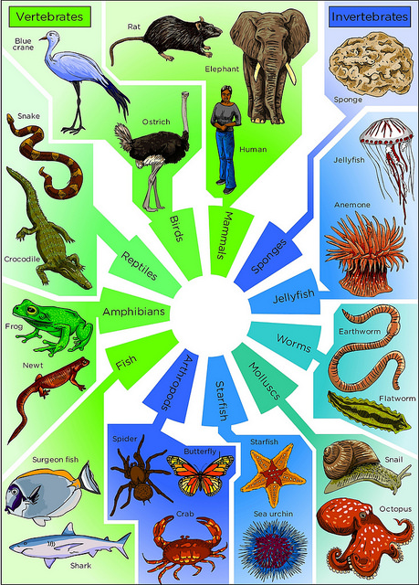 Difference Between Vertebrates and Invertebrates