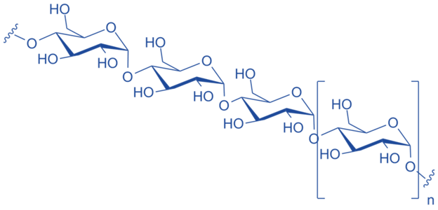 Main Difference - Amylose vs Amylopectin