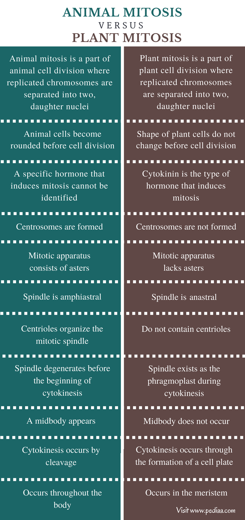 Difference Between Animal and Plant Mitosis - Comparison Summary
