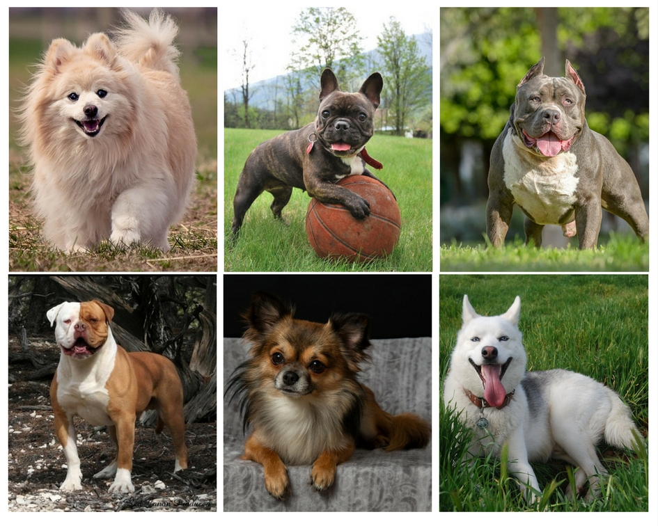 Difference Between Breed and Species