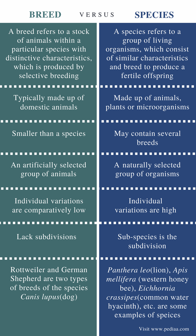 Difference Between Breed and Species - Comparison Summary