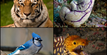 Difference Between Chordates and Vertebrates