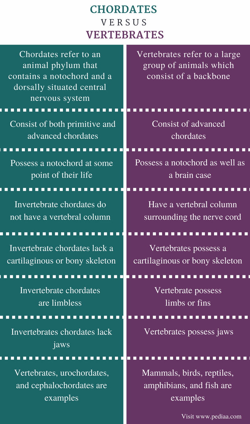 Difference Between Chordates and Vertebrates - Comparison Summary