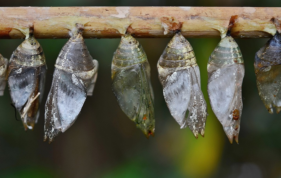 Difference Between Complete and Incomplete Metamorphosis_Figure 2