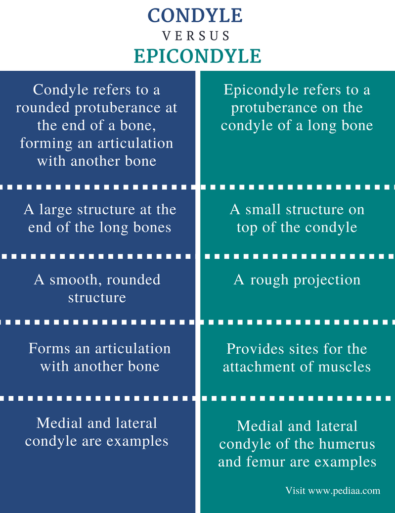 Difference Between Condyle and Epicondyle | Definition, Anatomy ...