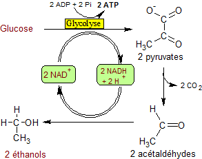 Main Difference - Fermentation vs Anaerobic Respiration