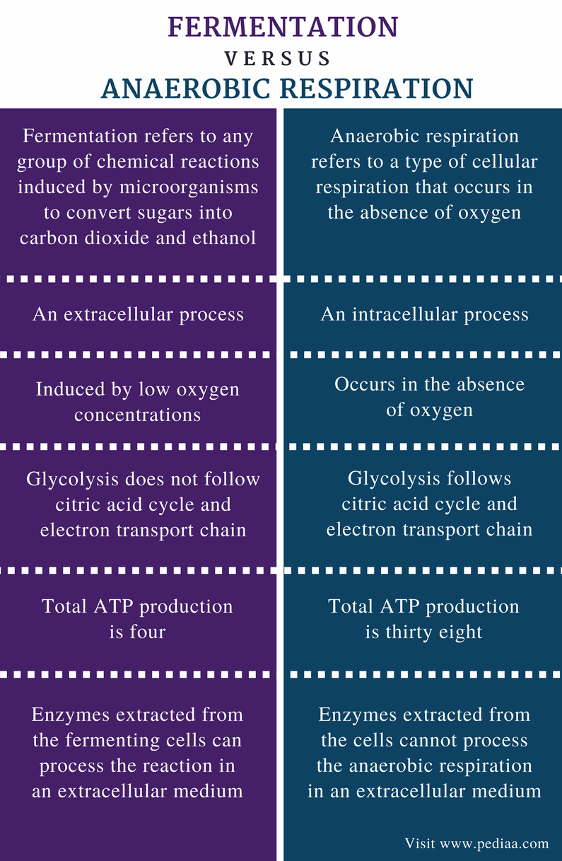 Difference Between Fermentation and Anaerobic Respiration - Comparison Summary