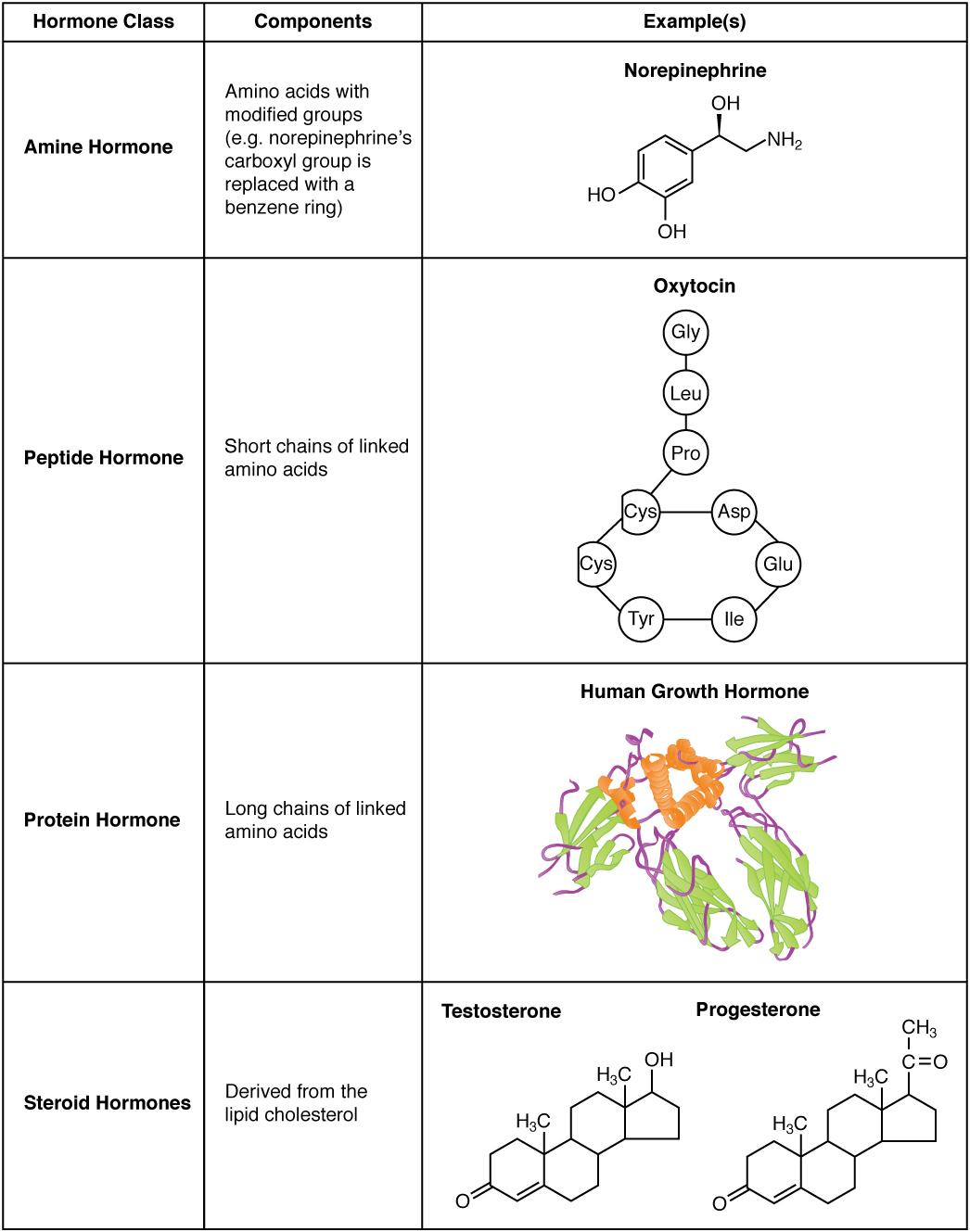 Difference Between Hormones and Pheromones
