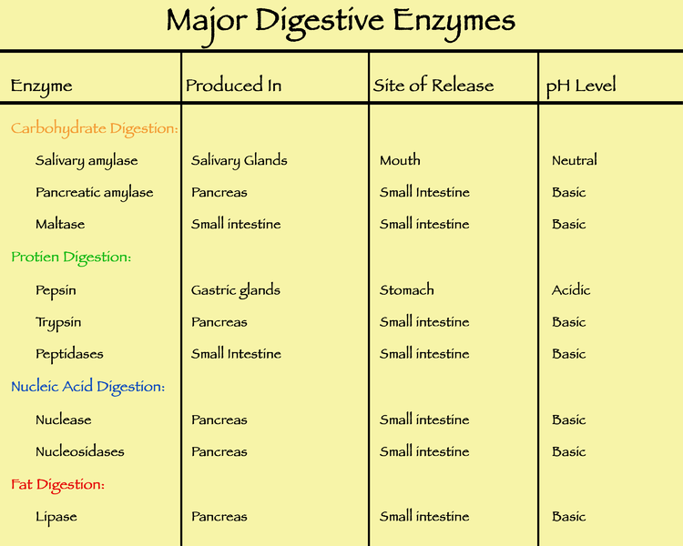 Difference Between Ingestion and Digestion_Figure 4