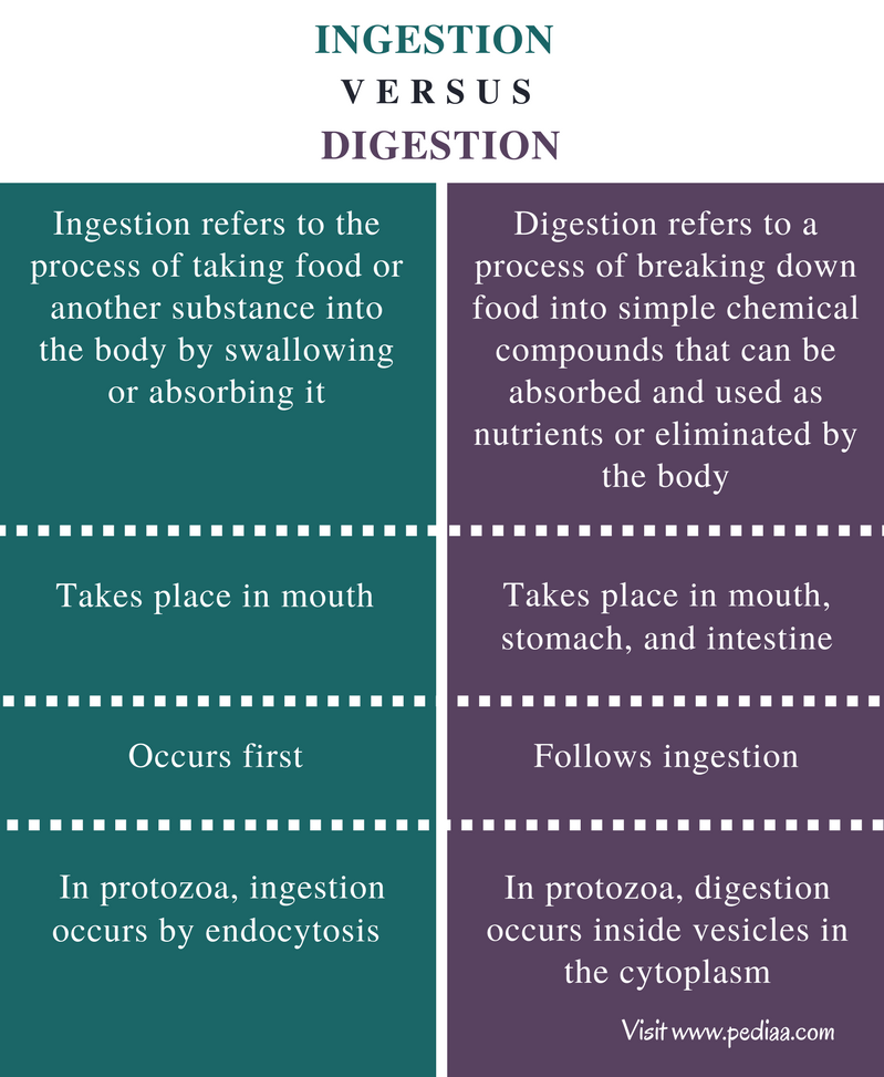 Difference Between Ingestion and Digestion - Comparison Summary