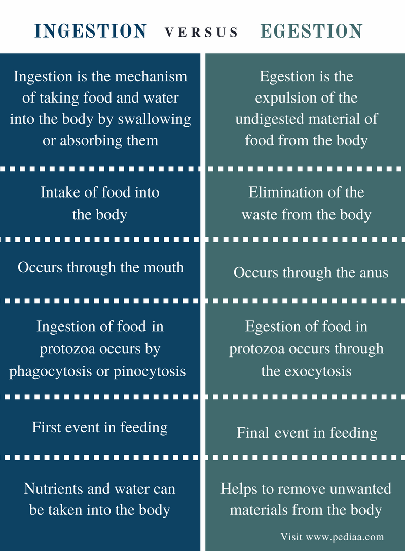 Difference Between Ingestion and Egestion - Comparison Summary