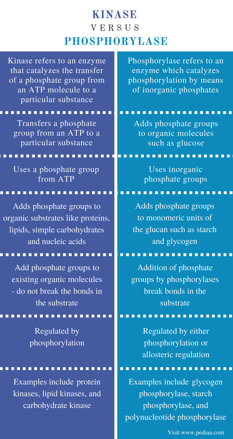 Difference Between Kinase and Phosphorylase - Comparison Summary