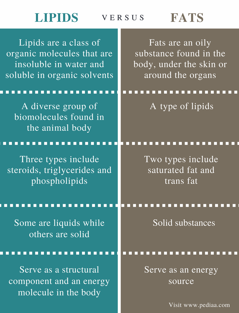 Difference Between Lipids and Fats - Comparison Summary
