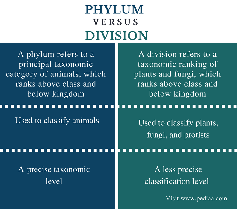 Difference Between Phylum and Division - Comparison Summary