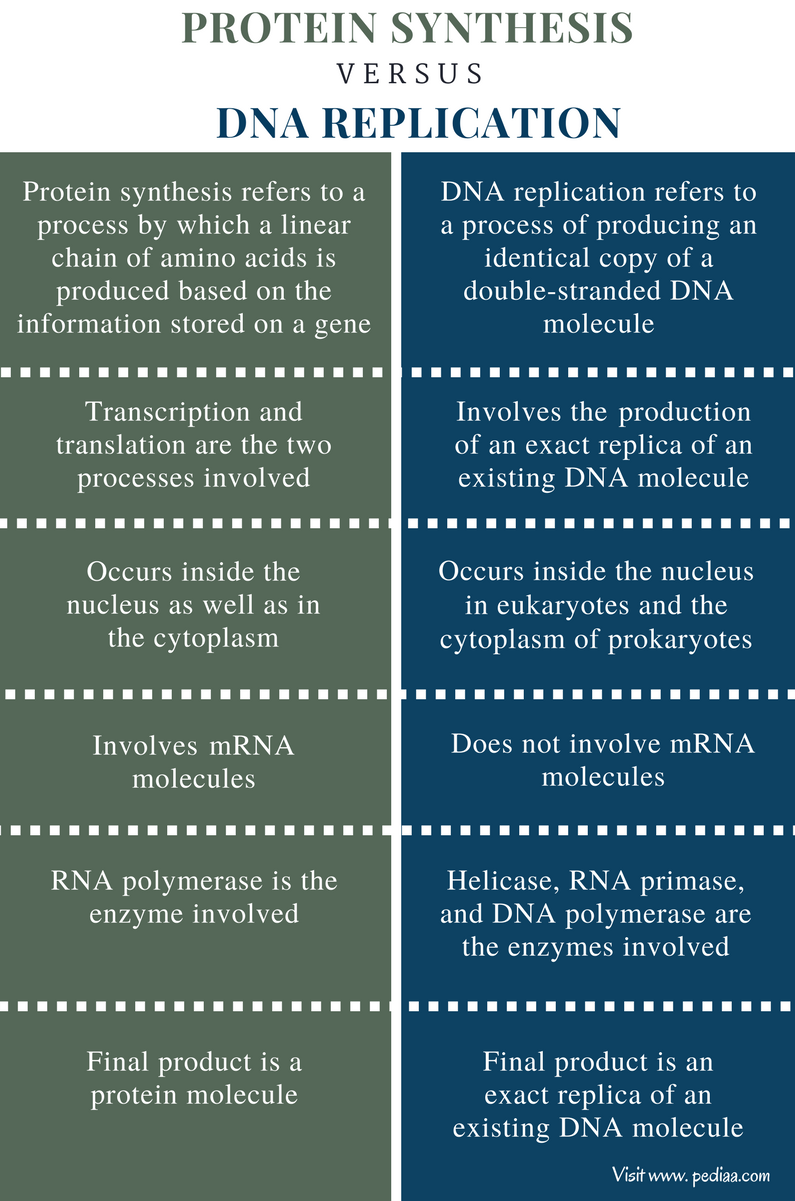 Difference Between Protein Synthesis and DNA Replication - Comparison Summary