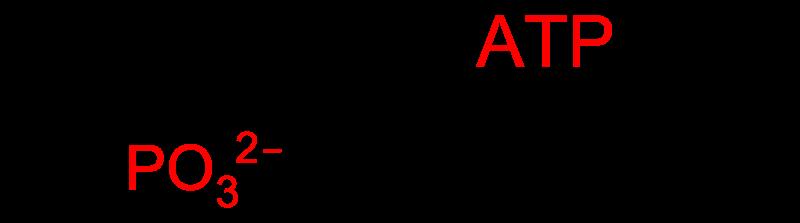 Main Difference - Substrate Level Phosphorylation vs Oxidative Phosphorylation
