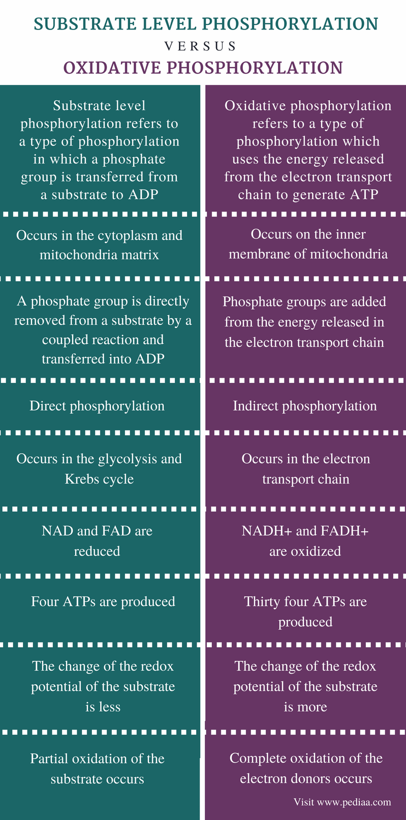 Difference Between Substrate Level Phosphorylation and Oxidative Phosphorylation - Comparison Summary