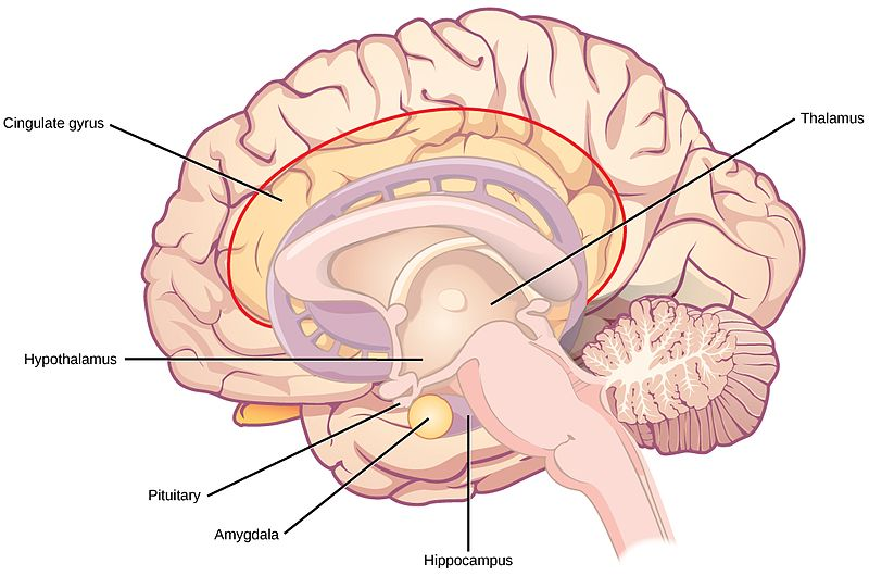 Relationship Between Hypothalamus and Pituitary Gland_Figure 1