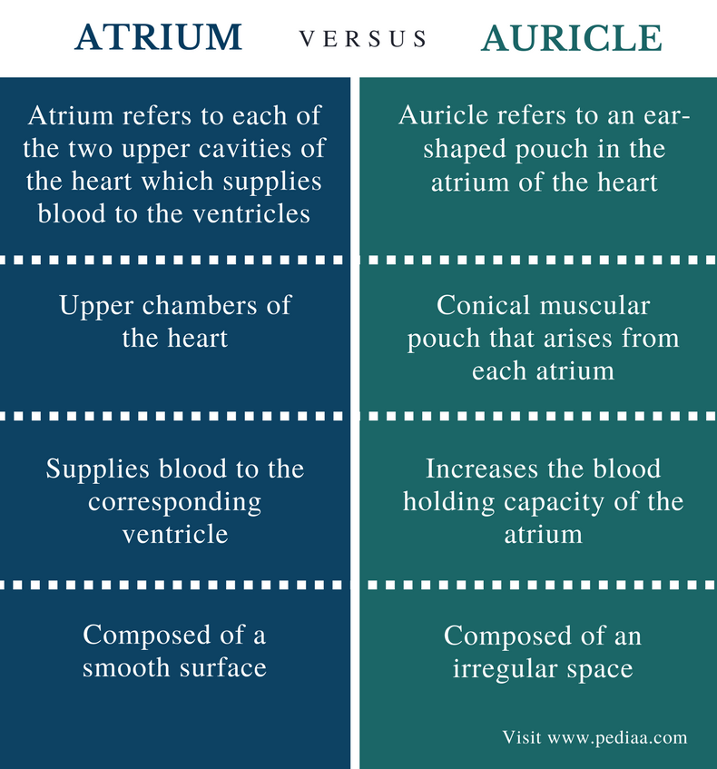 Difference Between Atrium and Auricle - Comparison Summary