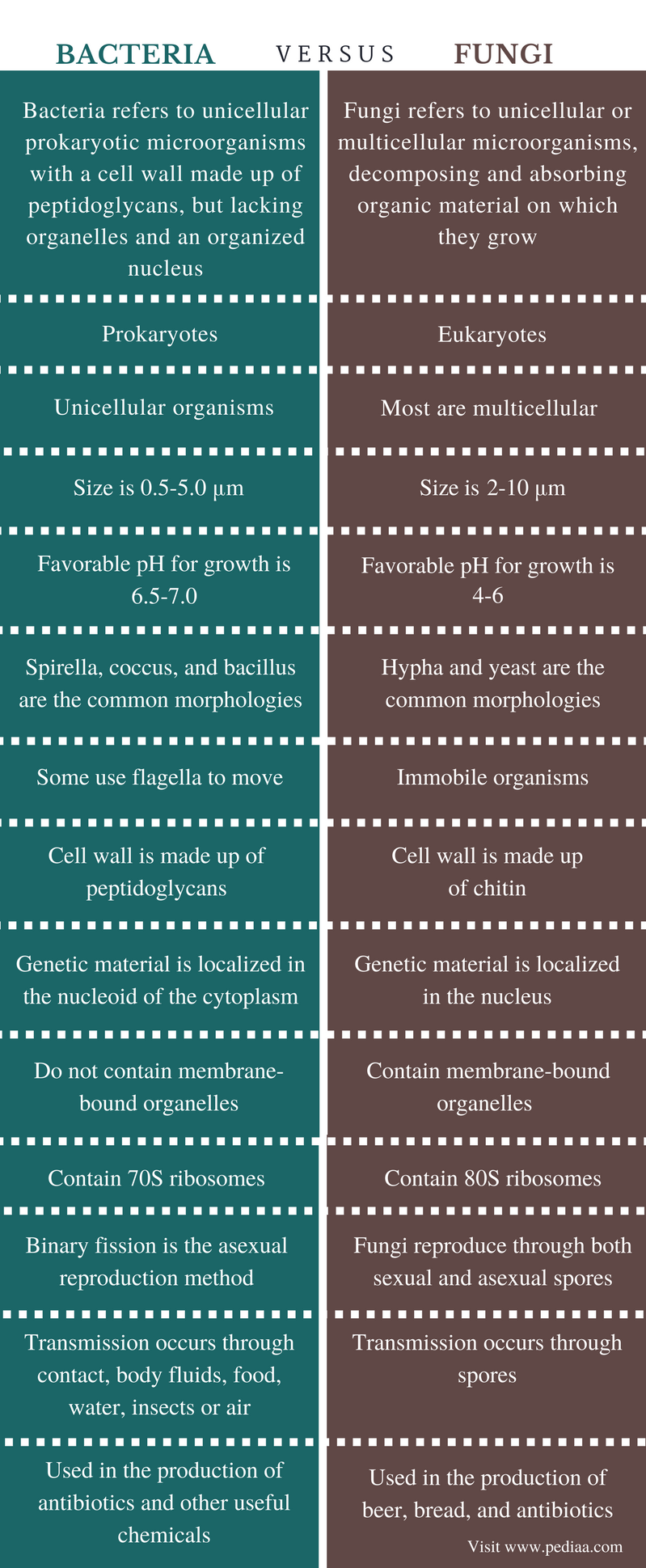 Difference Between Bacteria and Fungi - Comparison Summary