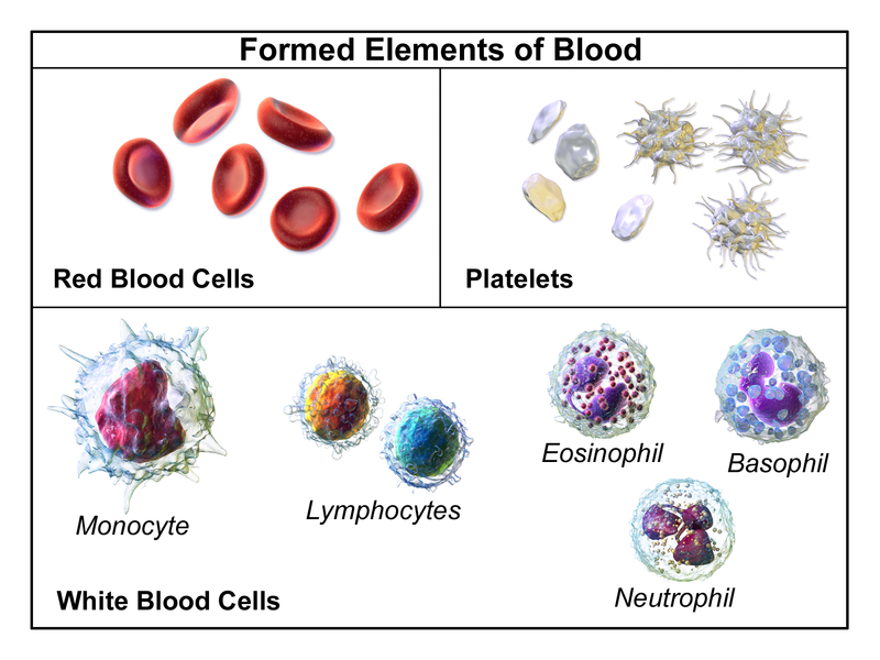 Difference Between Blood and Plasma